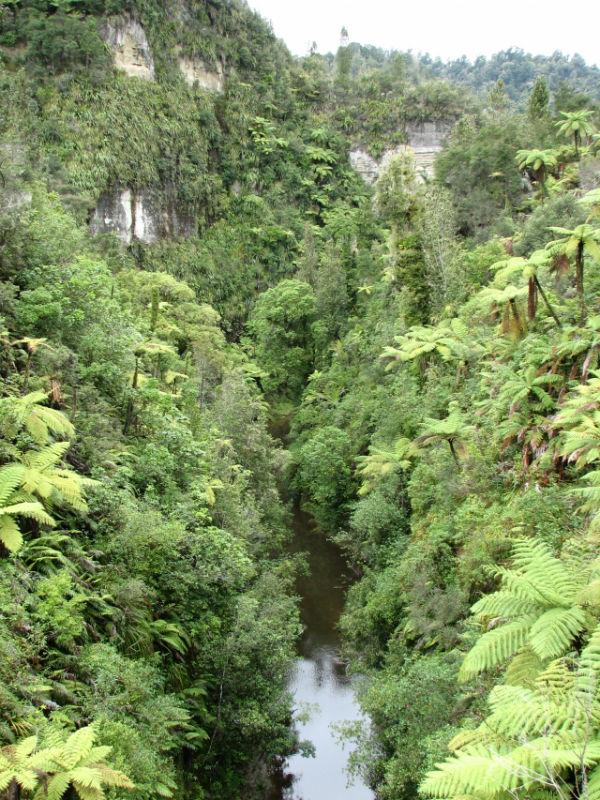 Мост в никуда в Национальном парке Вангануи