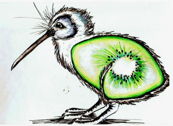 Символ Новой Зеландии - птица киви
