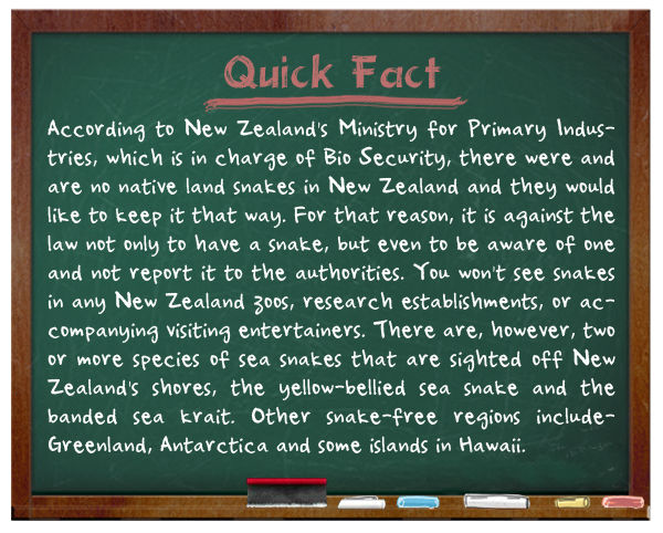 В Новой Зеландии змей нет в дикой природе, а также их категорически запрещено держать и разводить.